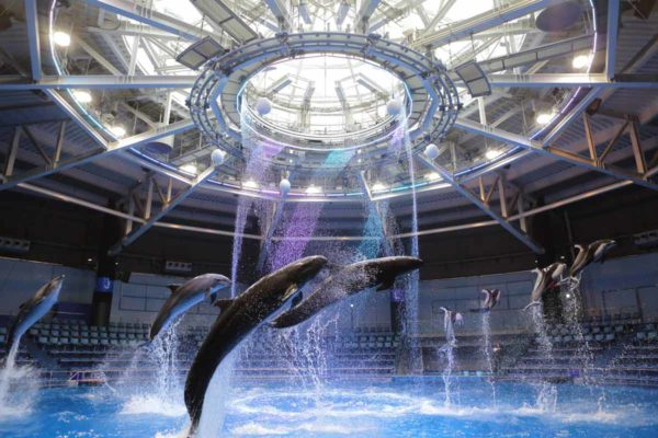 dolphin_day